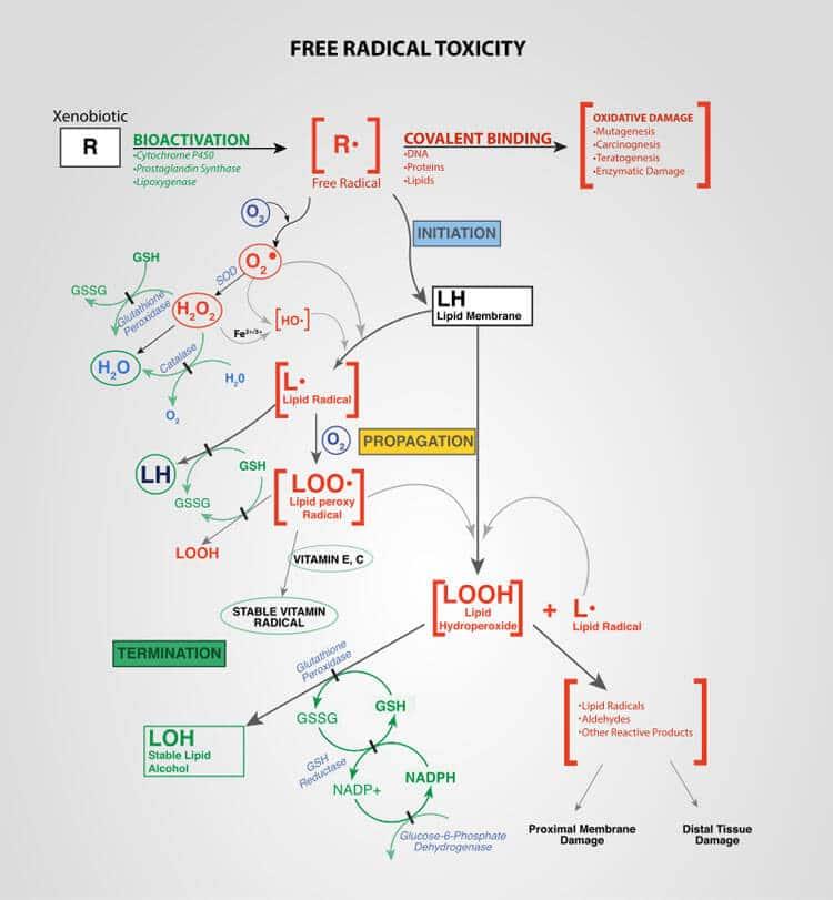 Free radical toxicity