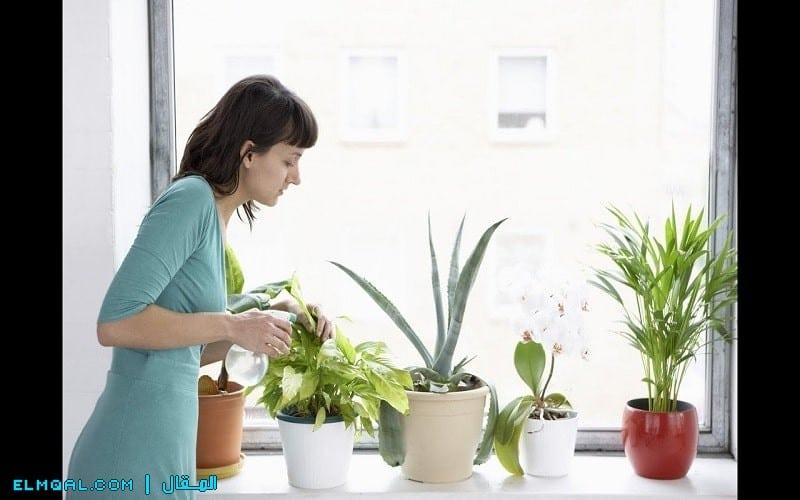 تعرف على أهم المعلومات عن النباتات والعناية بها واجعل حديقتك مزدهرة