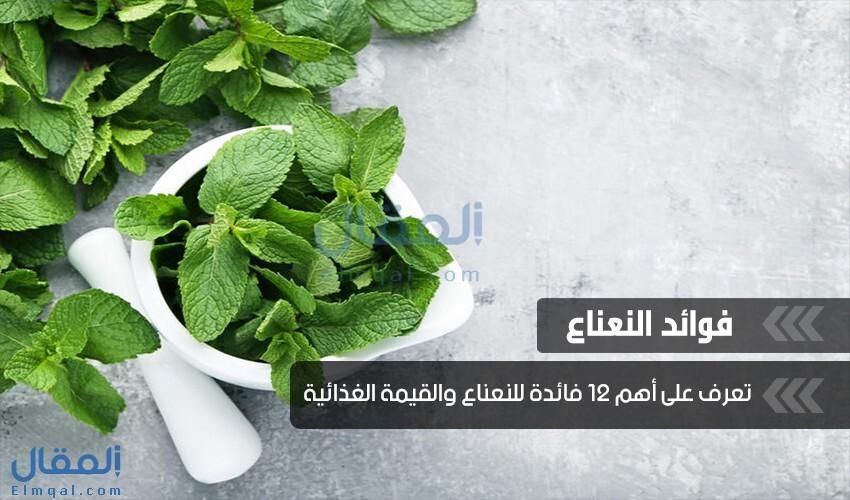 فوائد النعناع Mint المدهشة