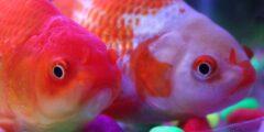 تعرف أكثر على عالم الأسماك المذهل