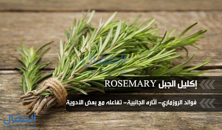 إكليل الجبل Rosemary عشبة تتألق في مطبخنا العربي وفوائده وأضراره