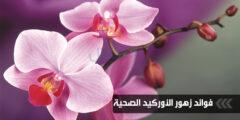 فوائد زهور الأوركيد الصحية