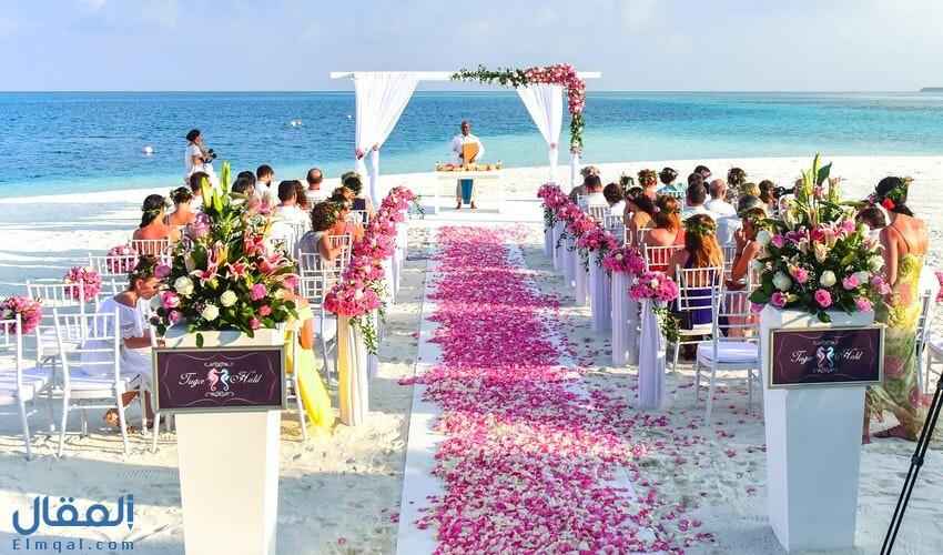 تفسير معنى رؤية العرس في المنام