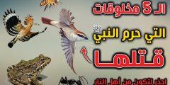 الحيوانات الخمس التي حرم الإسلام قتلها
