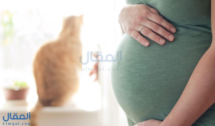 كل ما تريد معرفته عن داء القطط (التوكسوبلازما) ونصائح للوقاية منها