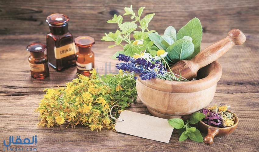 إملأ حديقتك بالنباتات الطبية لتحصل على العديد من الفوائد المدهشة لصحتك