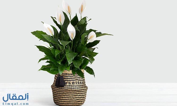 نباتات داخل المنزل