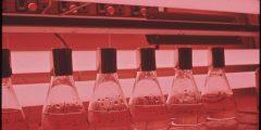 """تعرف على علم الأحياء الدقيقة """"الميكروبيولوجي"""" وأهميته"""