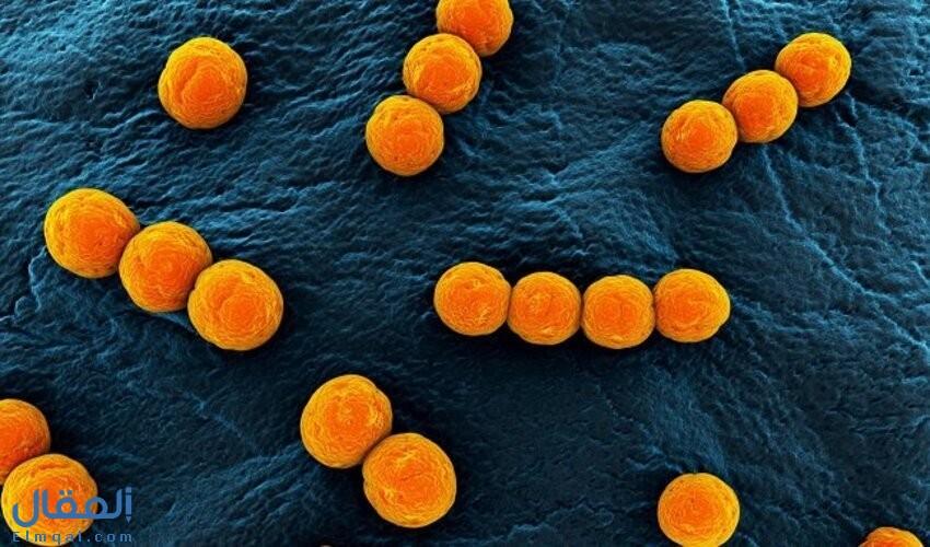 معلومات مهمة عن البكتيريا الكروية وأشكال البكتيريا الأخرى الأكثر شيوعًا