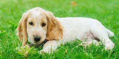 أحلى اسماء كلاب ذكور عربية وأجنبية ومعانيها والشخصيات التي تناسبها