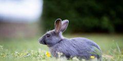 أسماء أرانب جميلة ومتنوعة للذكور والإناث وكيفية اختيار اسم الأرنب الخاص بك