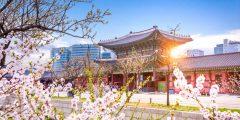 أفضل 4 مدن للطلاب في كوريا الجنوبية